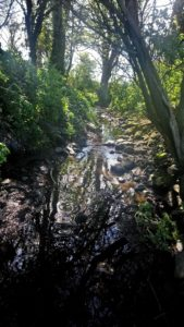 The Burn upstream with mature trees along it